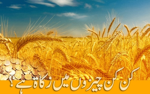Zakat Kin Cheezon Par Farz Hai